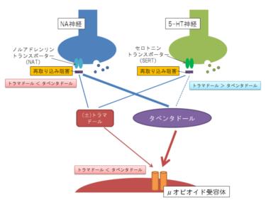 タペンタ錠(タペンタドール)発売~トラマドールとの違いは?