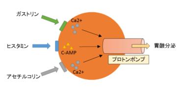 タケキャブ(ボノプラザン)承認了承~新規酸関連疾患治療薬 P-CAB